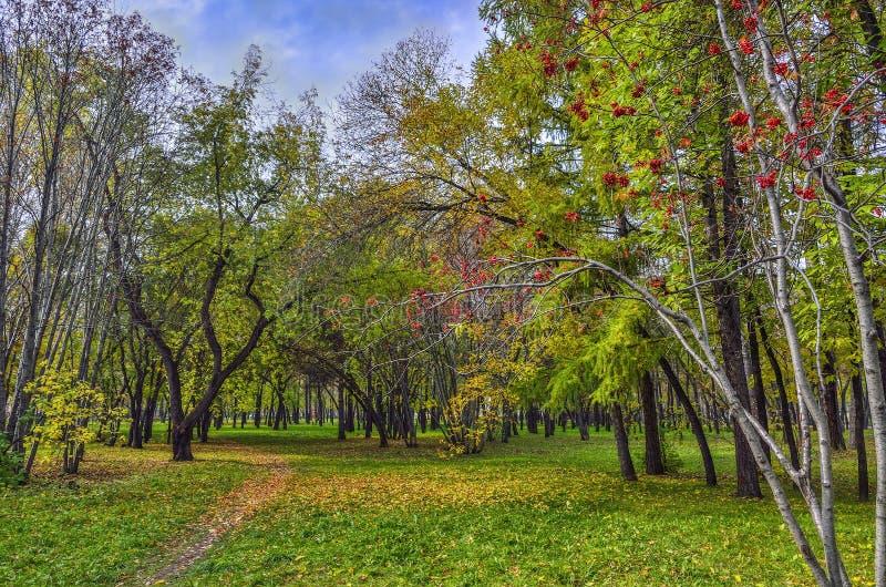 Красочный ландшафт осени в парке города стоковые фотографии rf