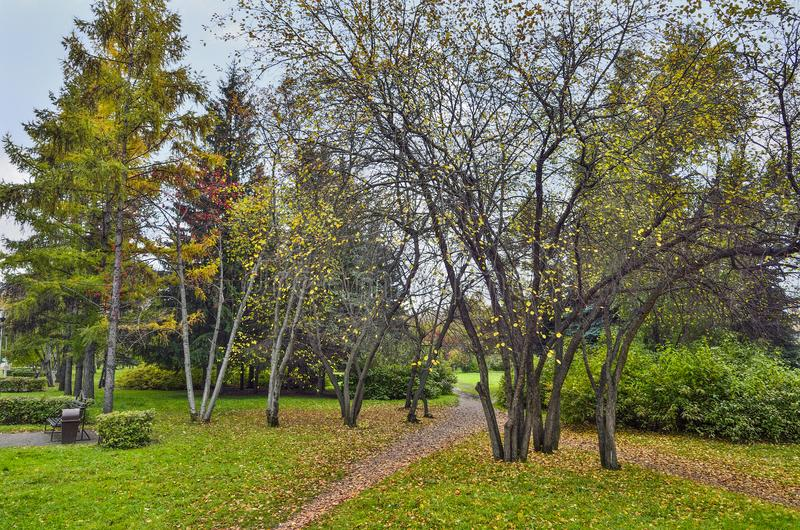 Красочный ландшафт осени в парке города стоковое изображение