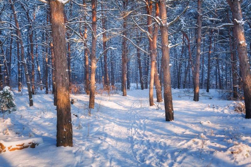 Красочный ландшафт с снежными деревьями и следом стоковое фото