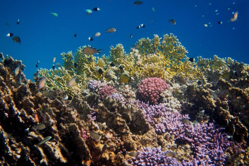 Красочный мир коралла стоковое изображение rf