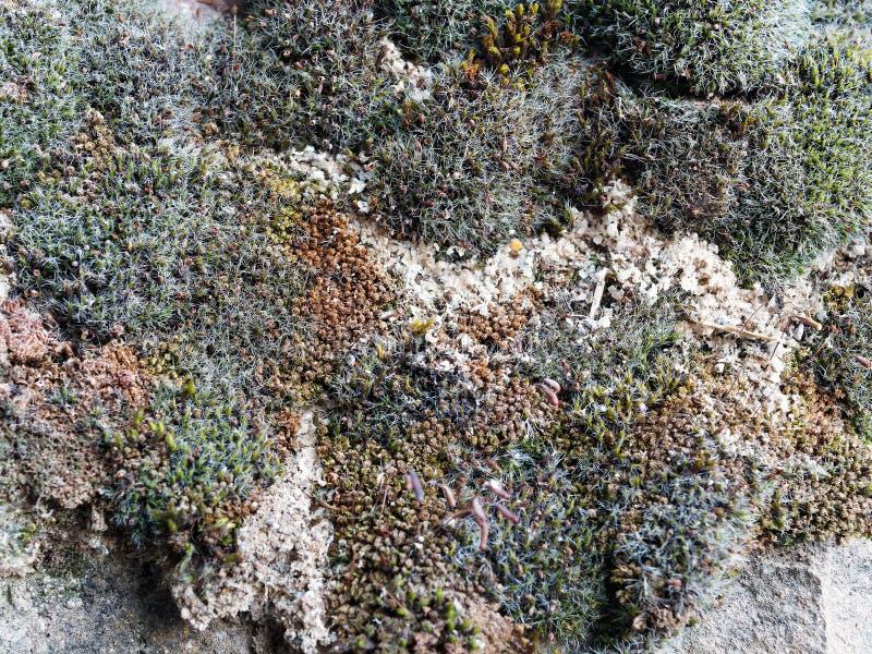 Красочный мох на каменной стене, Греции стоковая фотография