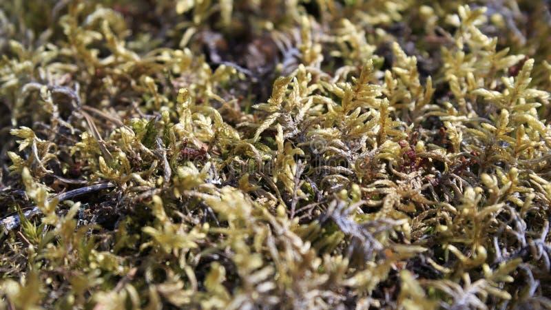 Красочный мох стоковое изображение rf