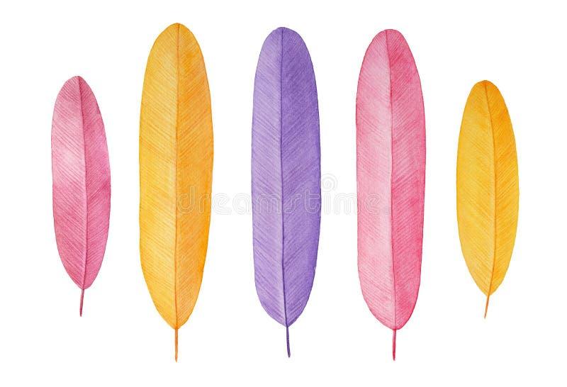 Красочный набор красивых декоративных пер иллюстрация вектора