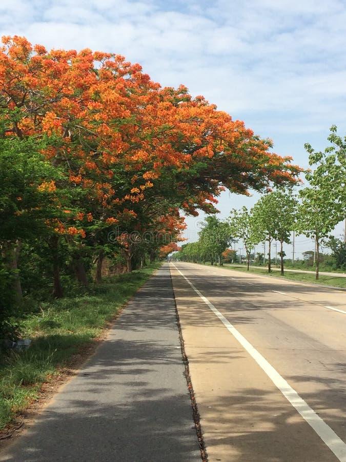 красочный на дороге стоковые фотографии rf