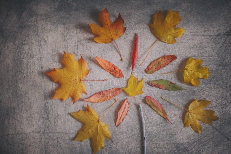 Красочный осенний состав листьев на серой Scratchy предпосылке стоковая фотография rf