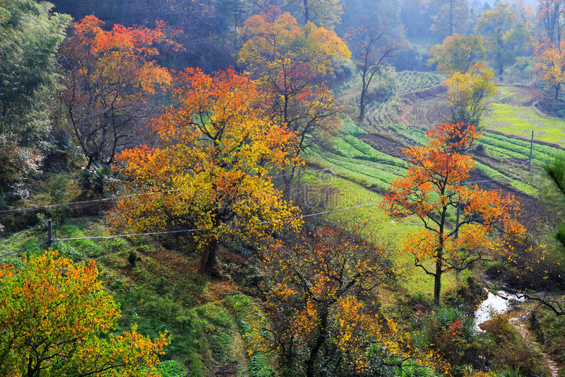 Красочный пейзаж осени в Tachuan стоковые фото