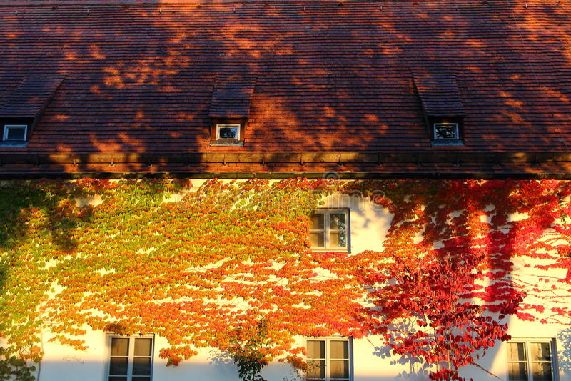 Красочный плющ покрыл фасад дома стоковое фото rf