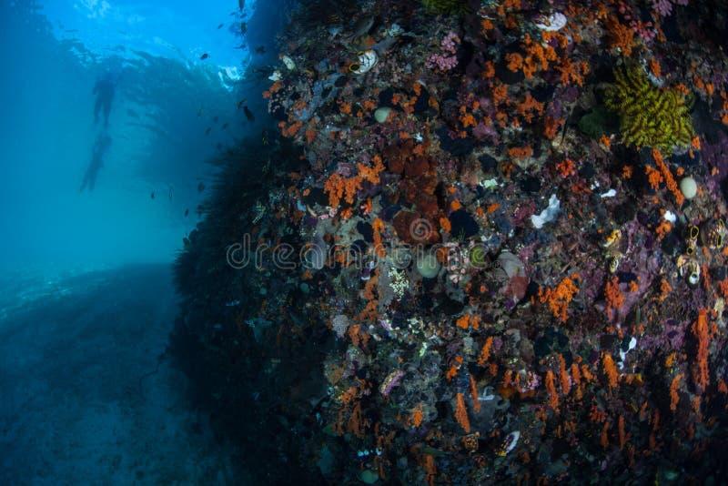 Красочный риф и Snorkelers стоковое фото rf