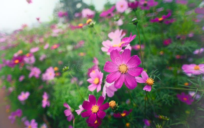 Красочный сад стоковые фотографии rf