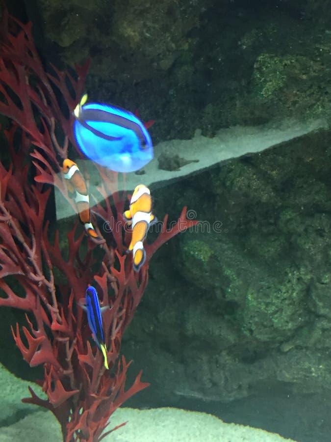 Красочный тропический риф круга рыб стоковое фото