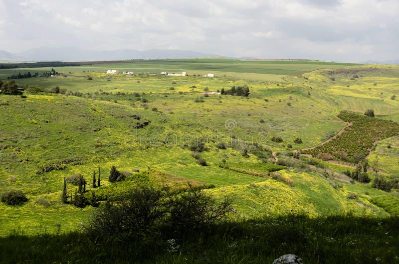 Красочный луг горы стоковое фото