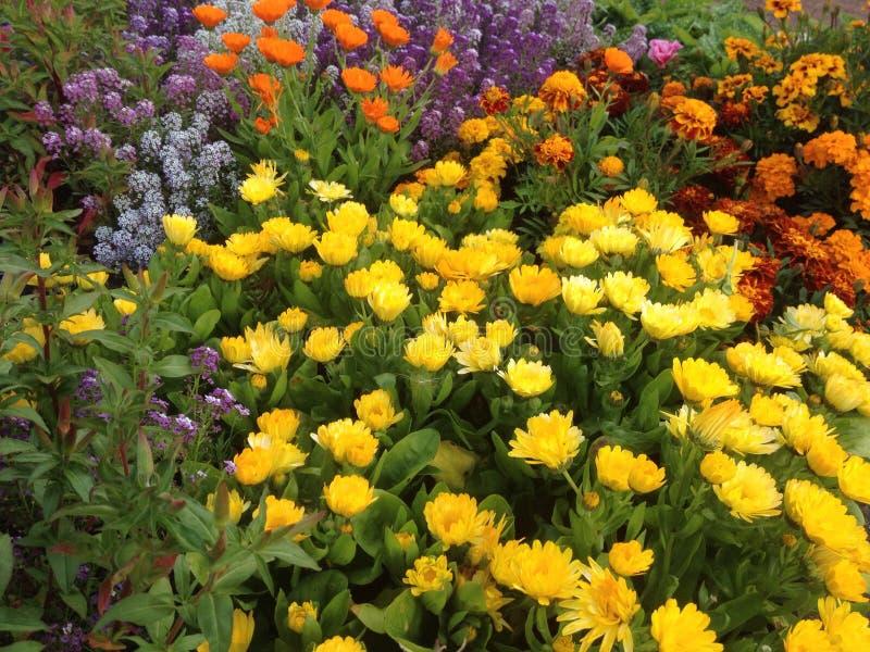 Красочный цветочный сад стоковые фотографии rf