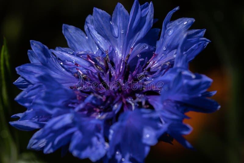 Красочный, beautyful конец цветка вверх по макросу, естественному bacground стоковая фотография