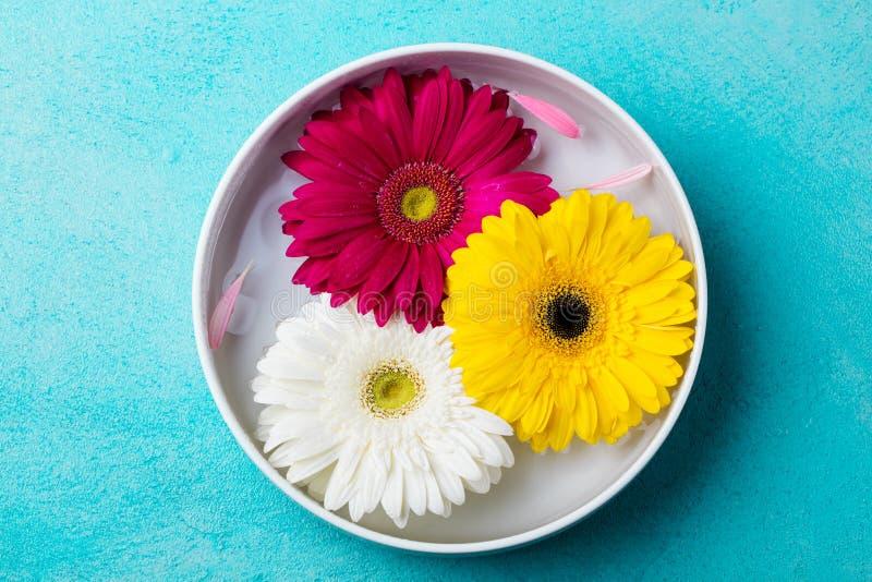 Красочный gerbera цветет плавать в шар с водой Предпосылка голубого камня стоковые изображения