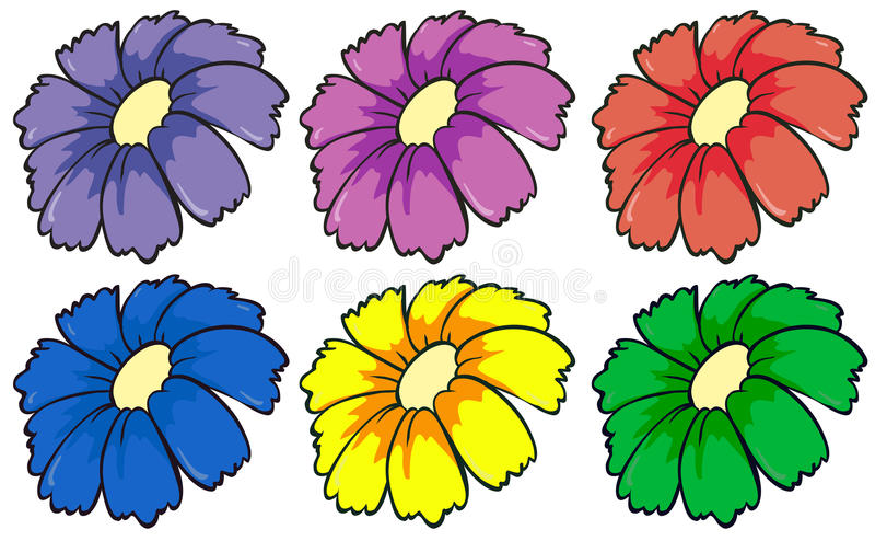 6 красочных цветков бесплатная иллюстрация