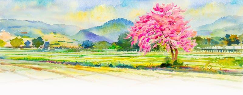 Крася розовый цвет одичалой гималайской вишни цветет бесплатная иллюстрация