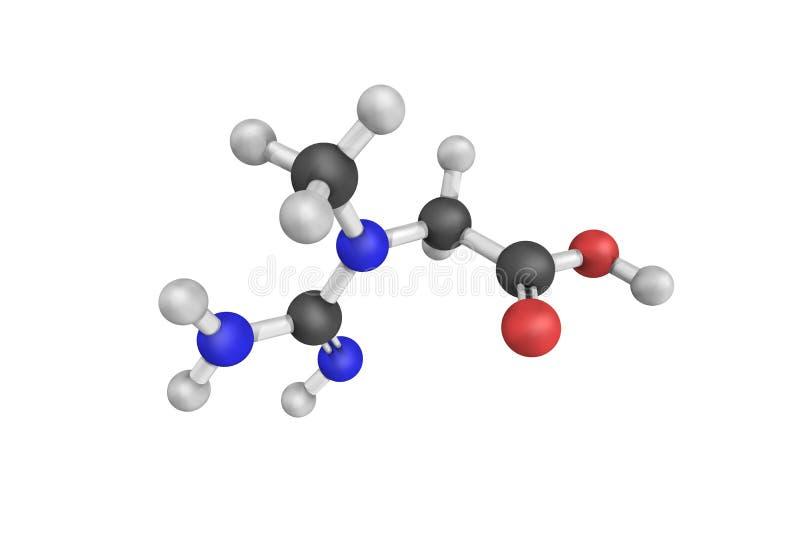 Креатин, nitrogenous органическая кислота которая происходит естественно в ve стоковое изображение rf