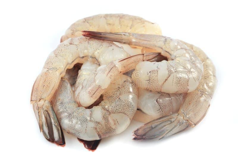 Креветка сырцовая стоковое фото rf
