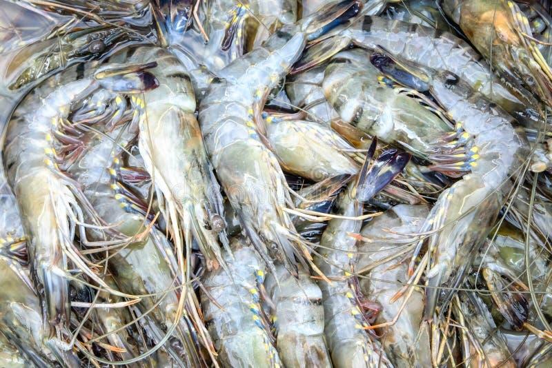 Креветка тигра стоковые изображения rf