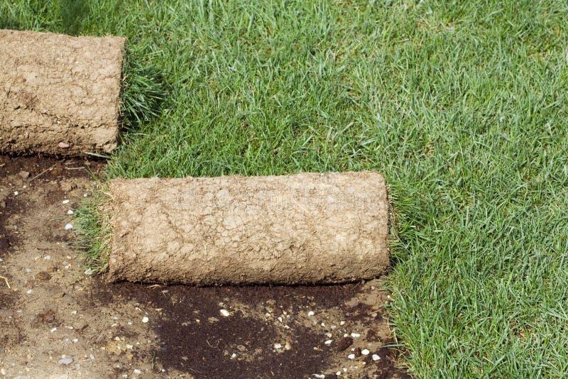 крены травы ковра стоковая фотография rf