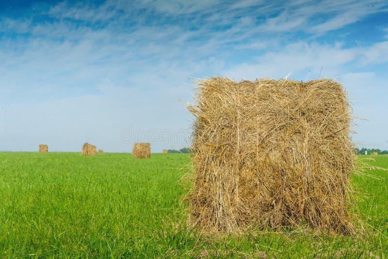 Крен сена на зеленом поле против красивой предпосылки неба стоковое фото rf