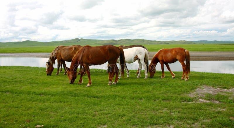 Крепкая лошадь прерии стоковая фотография rf