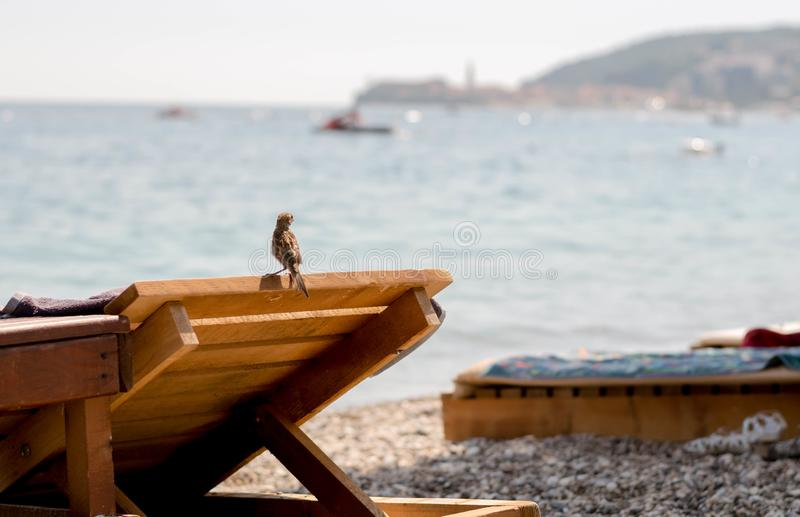 Кресла для отдыха стоковые изображения