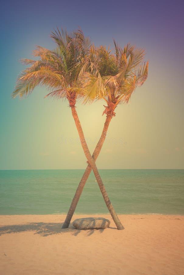Крест пальмы 2 кокосов на тропическом пляже на дневном времени стоковые фотографии rf