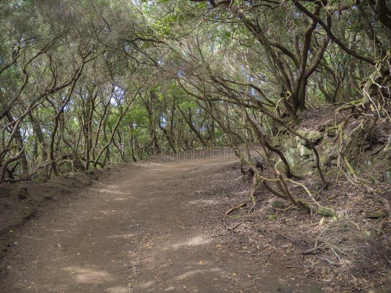 Кривая тропы на пути od Sendero de los Sentidos чувства внутри стоковые изображения rf