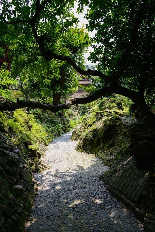 Криво дерево на rockery мимо мостить каменный путь в солнечном лете стоковые изображения