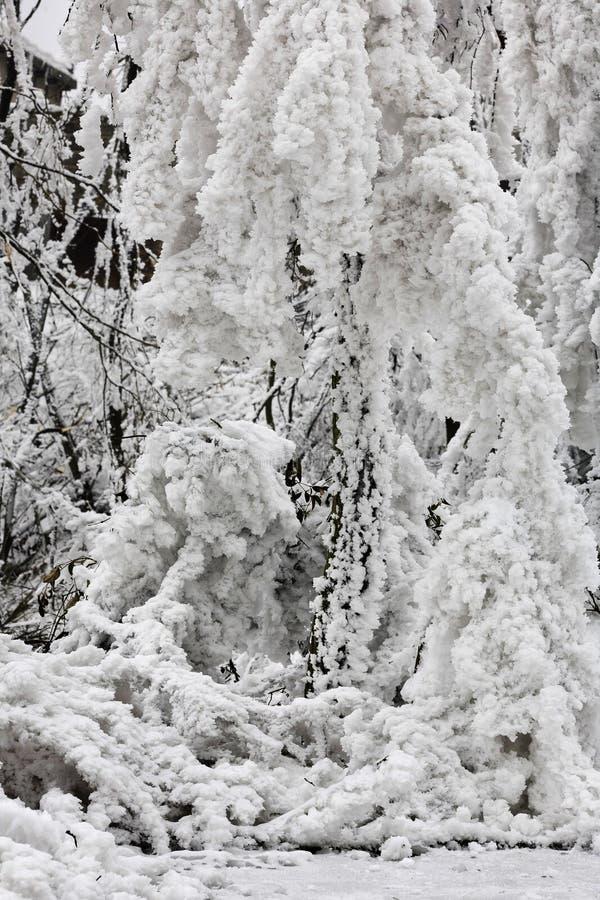 кристаллический льдед стоковая фотография rf