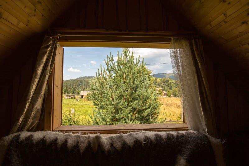 Кристмас Tree спрус carpathians Окно в другой мир яркое солнце Окно в природу стоковые фото