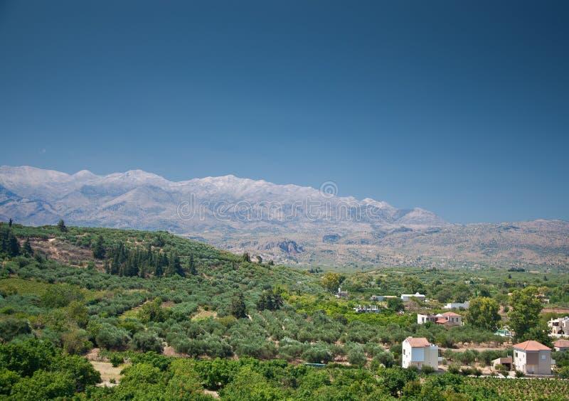 Крит fields оливка стоковые изображения