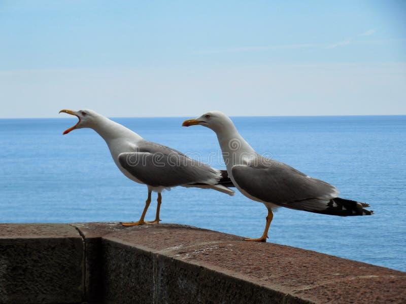 кричать чайки стоковое фото rf