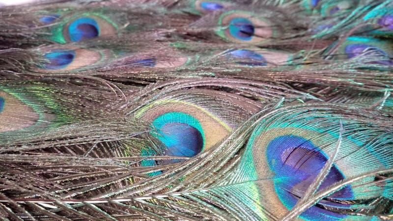 Кровать пера павлинов стоковые изображения