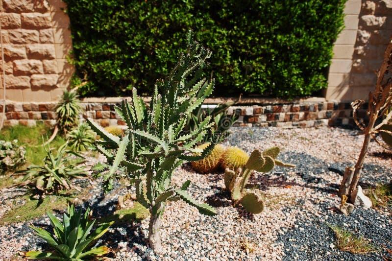 Кровать сада различного кактуса на солнечном дне стоковое фото