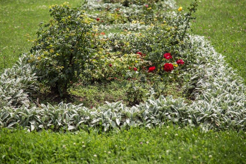 Кровать с розами и другими цветками стоковое изображение