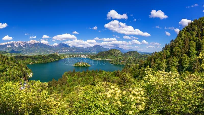 кровоточенное озеро Красивое озеро горы с малой церковью паломничества Большинств известные словенские озеро и остров кровоточили стоковые изображения
