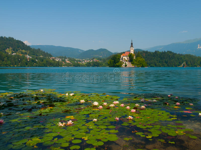 Кровоточенные остров и озеро с лилиями воды стоковые изображения rf