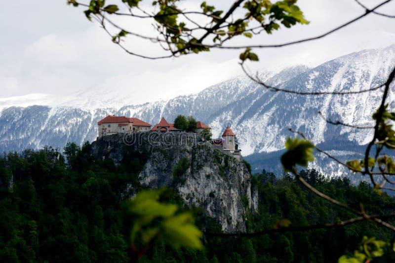 Кровоточенный замок озера, Словения стоковая фотография rf