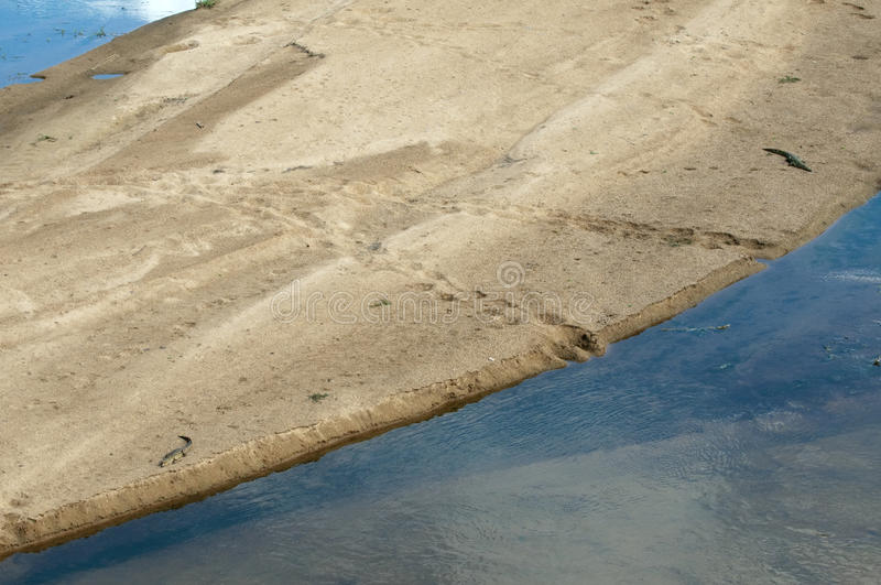 Крокодилы на sandbank в Африке стоковое фото rf