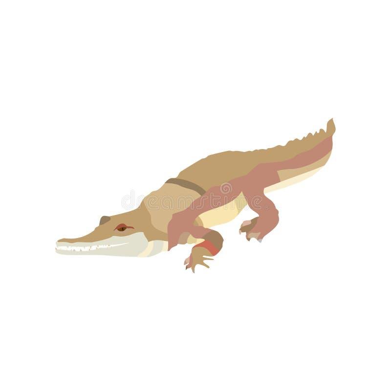 Крокодил мультфильма тропический изолированный на белой предпосылке Дикий характер аллигатора гада r иллюстрация вектора