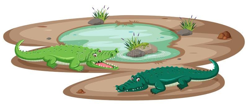 Крокодил на пруде иллюстрация штока