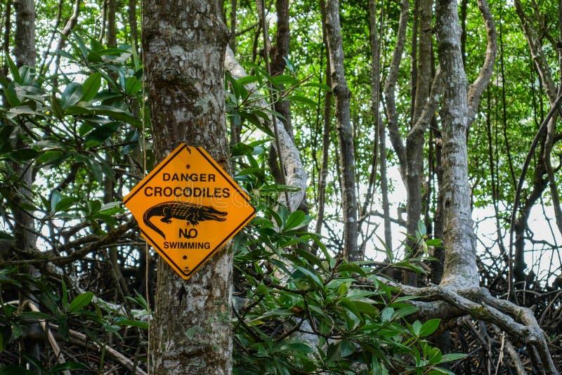 Крокодил опасности отсутствие знака заплывания с мангровой на заднем плане стоковые фотографии rf