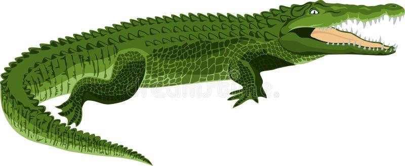 Крокодил вектора изолированный на белизне иллюстрация штока