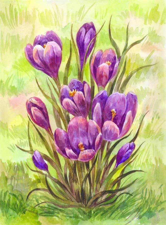 Крокусы акварели на траве сада Illus весны нарисованное вручную иллюстрация вектора