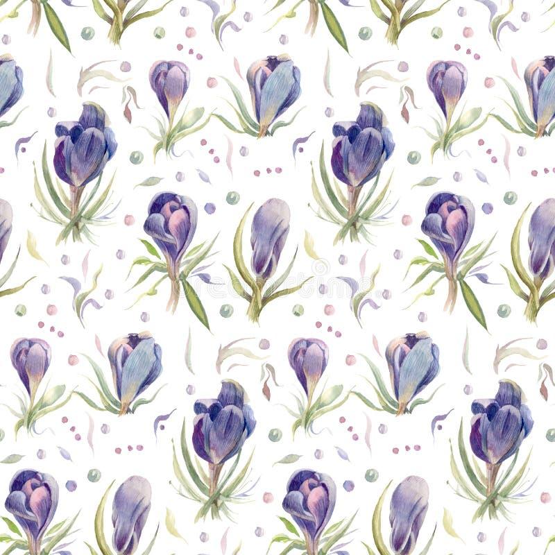 крокусы Цветки акварели весны изолированные на белой предпосылке иллюстрация вектора
