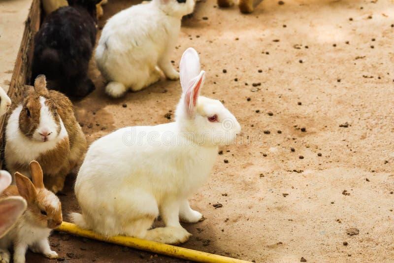 Кролики в ферме стоковая фотография rf