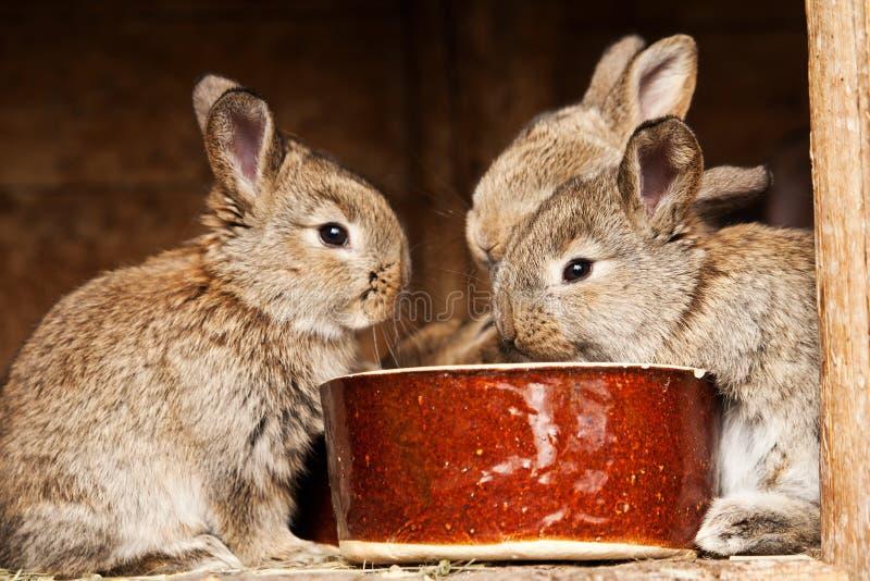 кролики малые стоковое фото