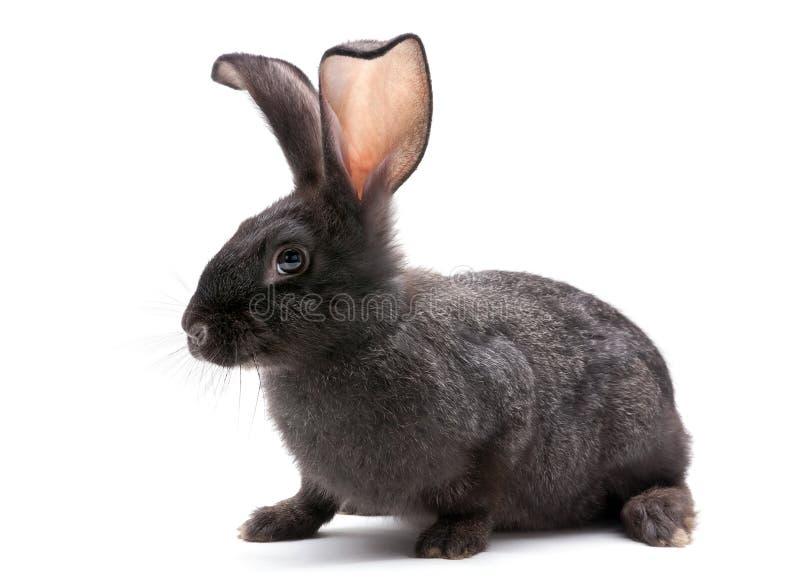 кролик животной фермы стоковые фотографии rf